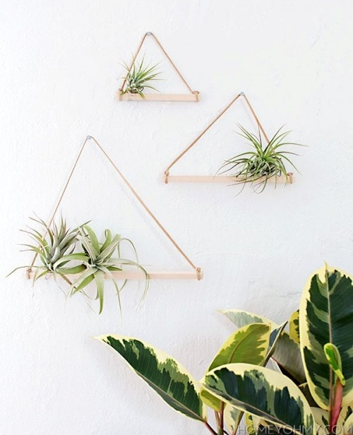 DIY air plants hanger