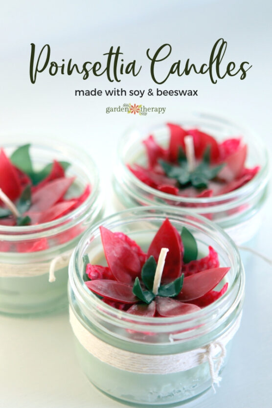 Red beeswax poinsettia candles inside mason jars